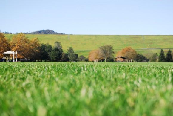 натуральная или искуственная трава